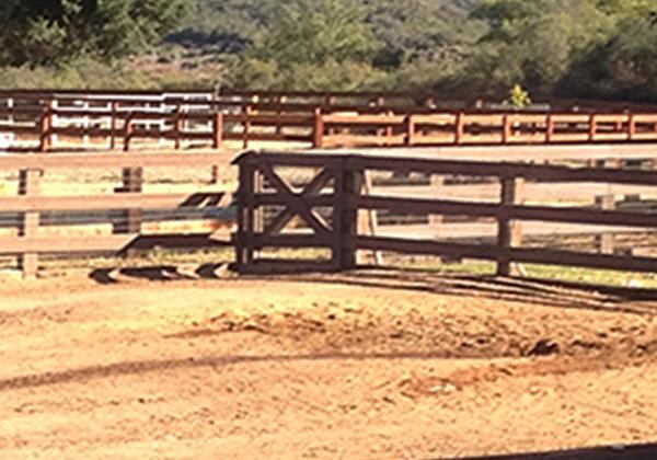 livestock gate